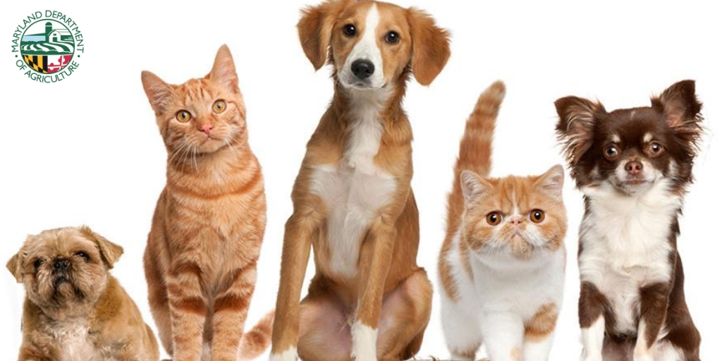 Meeting Notice: Maryland State Board of Veterinary Medical Examiners to Meet Sept. 24 via Teleconference https://t.co/fSWX0qMhfZ @MdVetBoard https://t.co/89flBXrgdZ