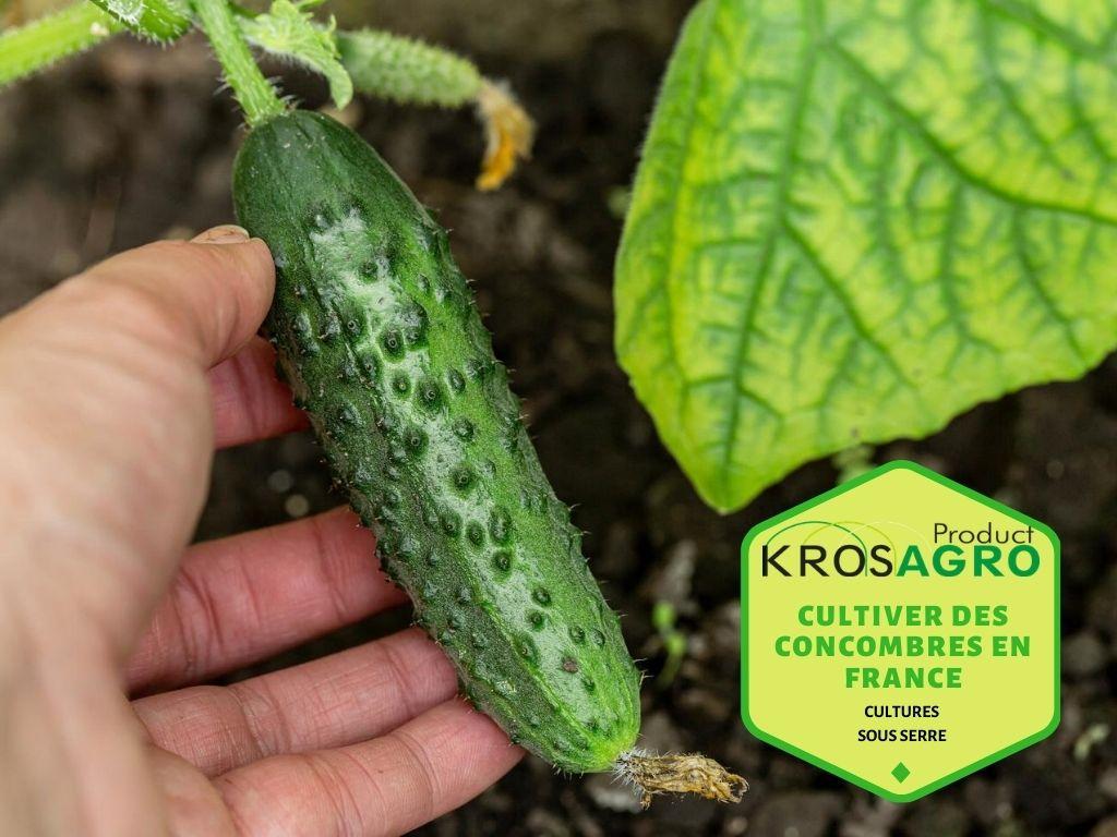 Cultiver des concombres en France  #Cultiver des #concombres sous #serre au #jardin est beaucoup plus facile que vous ne le pensez. Ceux ci sont riches en nutriments, en antioxydants et composés à 96% d'eau.  https://t.co/uMthGMVTcj https://t.co/SNITTqB6CM