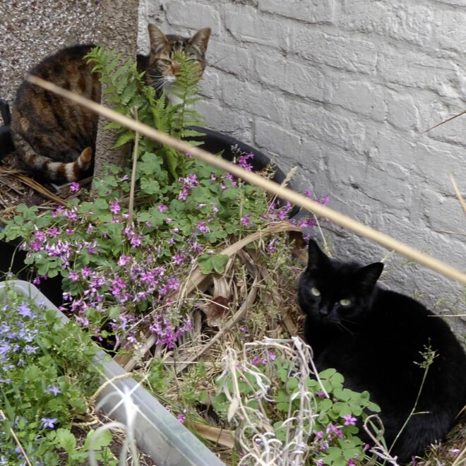 We are struggling to find Jet & Amber a new forever home. They are good natured cats that need a super quite home with outside space & patient owners, as they are scared of people.  Please DM if you can give them a forever home. https://t.co/IM2aR52GN9  #panfur #TabbyTroop https://t.co/g9w4BmnPwx