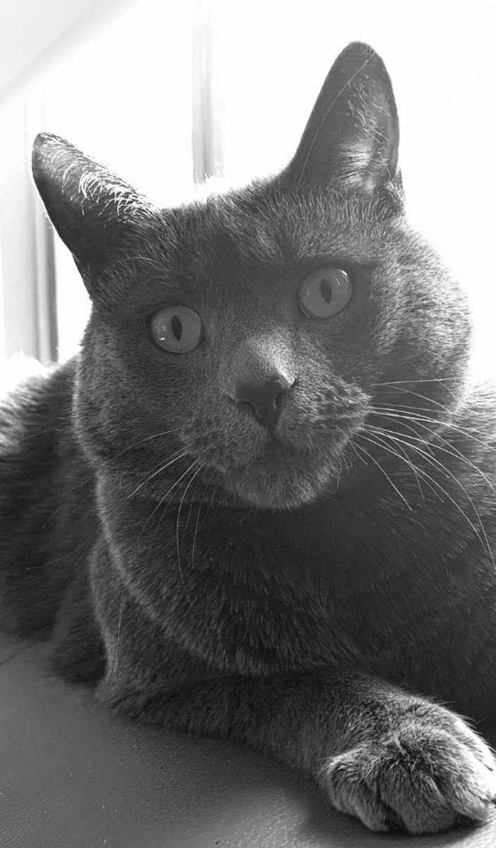 Oi ... be kind!  😸🐾 #cats #catsoftwitter https://t.co/4vUJan1OHe