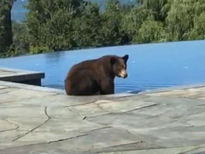 Bear visits Okanagan backyard, takes brief pool dip 🐻😯 @globalnews https://t.co/5WMFqUFSR6 #Bear #Pool #Okanagan https://t.co/55N5BpX37h