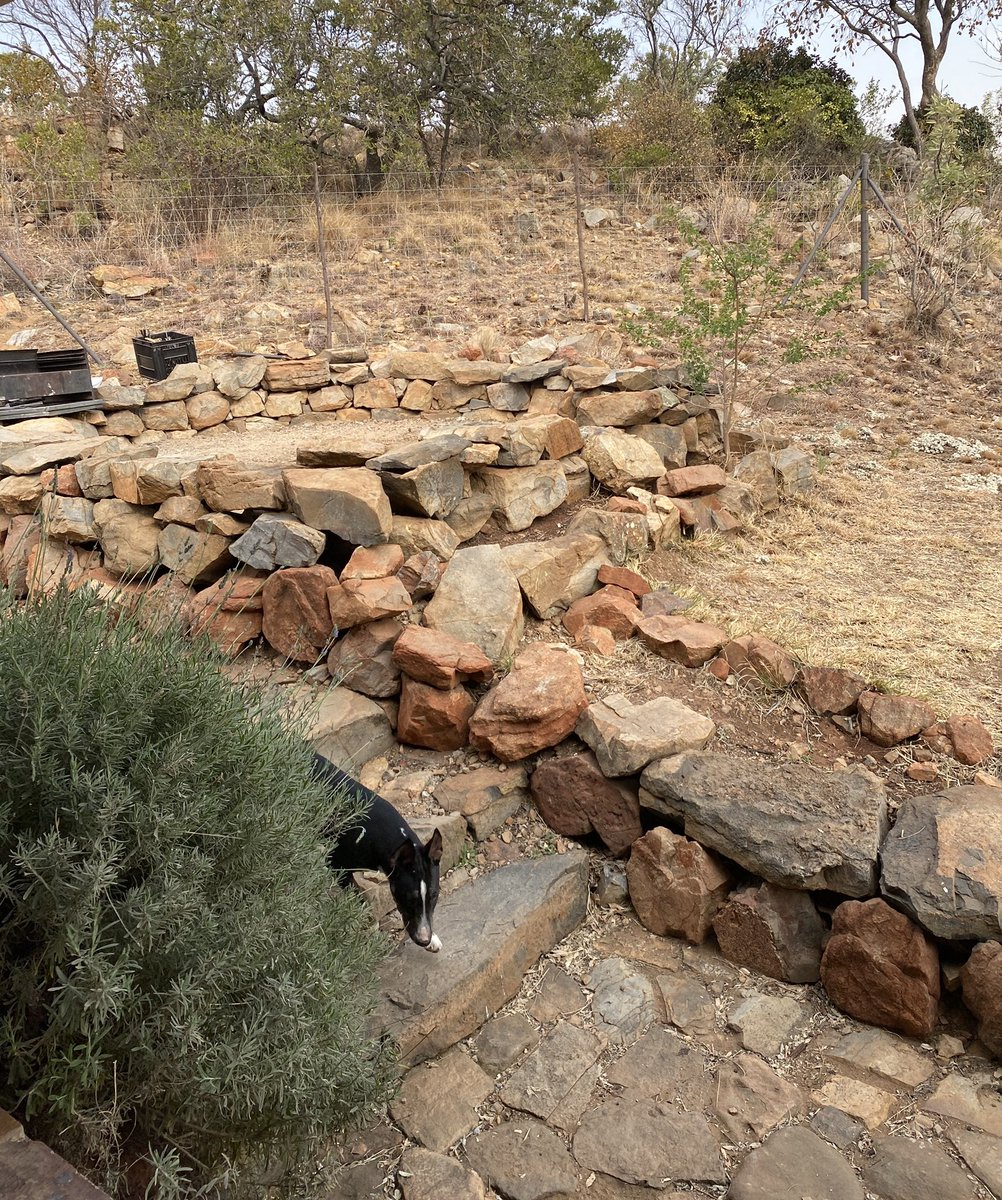 Midweek break in the #Bankenveld (which is on the transition between the #Bushveld and the #Highveld). The dogs love it. https://t.co/Hu2cY980NM
