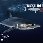 Image for the Tweet beginning: Pleased to represent #SharkLeague partners