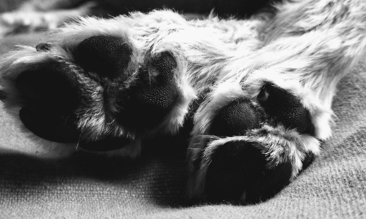 #BirkieBens back feet ❤️🐕