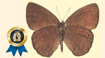 Estudo homenageia servidor do CNPq com novo gênero de borboletas.  https://t.co/DcVJXy7HeL https://t.co/nAiMEhVLF5