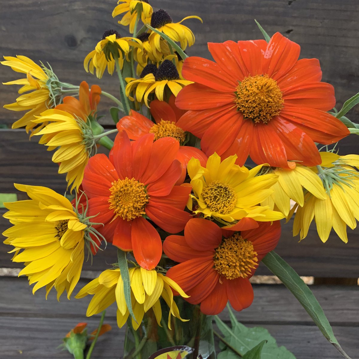 Another virtual bouquet. I call it the salsa mix. Happy Day! #MexicanSunflower #MaximilianSunflower and #rudbeckiaamericangoldrus #tithonia #sunflowers #blackeyedsusan #pacepicante https://t.co/K503X16it5