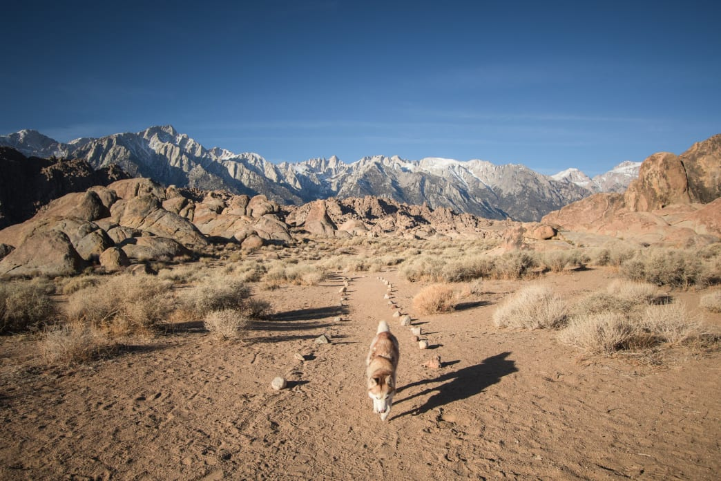 Hitting the trails with your dog means added responsibility. These six tips for trail running with your dog are a great way to prepare for many happy miles roaming the wilderness together. https://t.co/PdiFa2oLuH https://t.co/ZpY6aiU6bm
