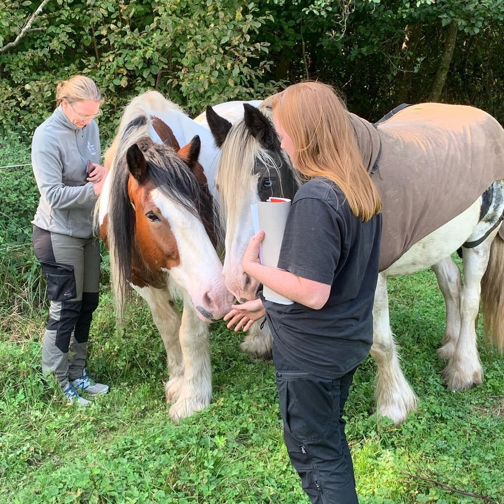 Our new MSc-project on horse welfare in Equine Assisted Interventions #AAI #EAI in collaboration with Humlamaden rehab and @YngvessonJenny starting up today! https://t.co/D3so13b8S1
