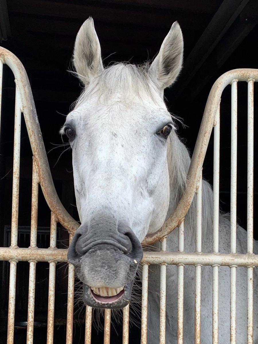 研修生向けの牧場説明会が10月から始まります🐎毎年多くの育成牧場に会社説明をしてもらい、就職活動がスムーズに行えます💫詳細はホームページをご確認ください。#競走馬 #競馬 #馬 #JRA #BOKUJOB #ボクジョブ #就活 #サラブレッド #牧場 #馬の仕事 #乗馬 #馬術 #引退馬 #北海道 #浦河町 #変顔