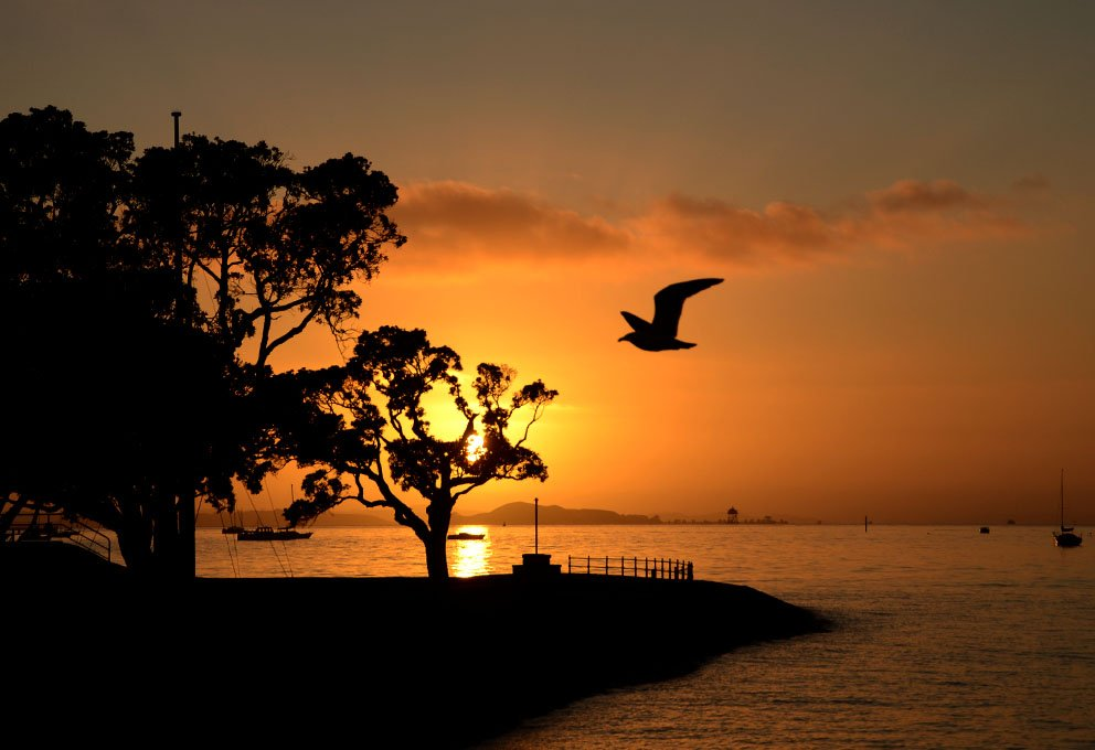 Morena! Good morning! Beautiful start of the day. #DevonportNZ #DevonportVillage #ourAKL #VisitAuckland #WeatherWatchNZ #NZStuff #Aotearoa #sunrise #silhouettes #Motukorea