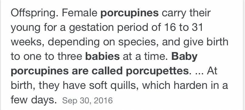 Answer is: Porcupettes. (So cute). Well done those who got it correct - you've won the knowledge of knowing, you were correct. Enjoy. 😸 https://t.co/YuKwIPRFFF