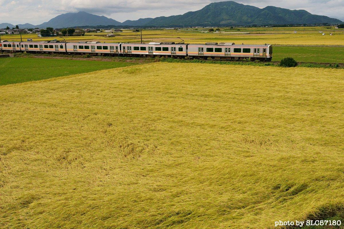 稲刈り進む。これは13日。 もう手前の田んぼも刈られたかなぁ🤔 パッチワークのような田園風景も好きなんだけど。  #E129系 #田園風景 #お米の国 #いなほ #パッチワーク #trainphotography #東京カメラ部 #α9 #SonyAlpha https://t.co/841CgVRSFm