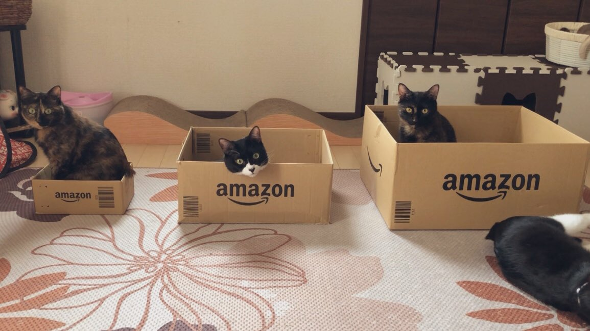 きっとそれぞれ好みがあるはずだから自分の好きな箱を選んでねと用意してあげた結果