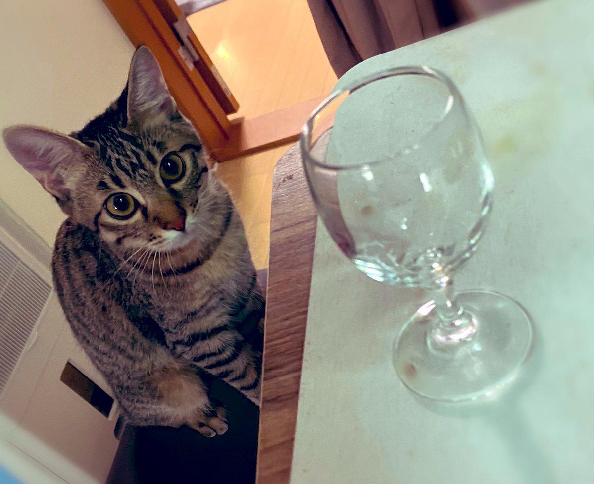 子猫が飲みに来るバー。
