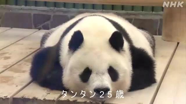 神戸市立王子動物園のジャイアントパンダ、タンタンが16日、25歳の誕生日を迎えました。#nhk_video
