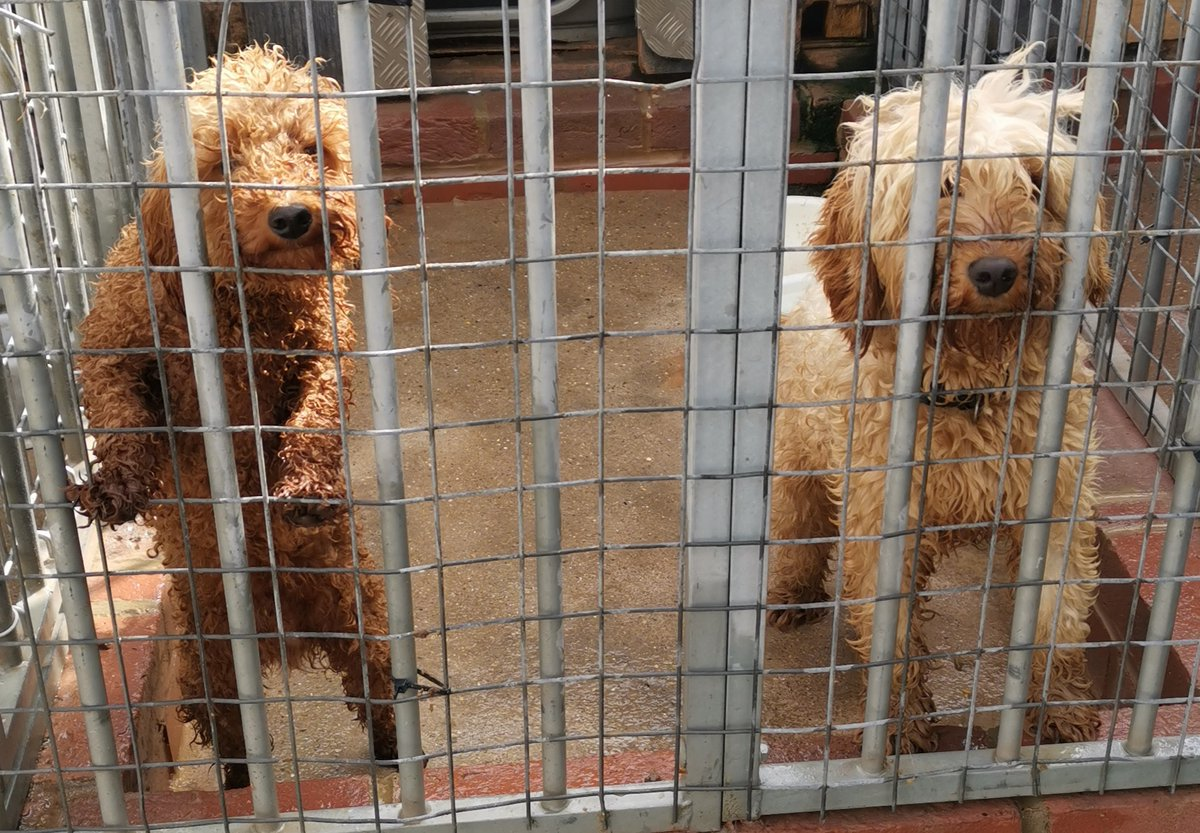 Following requests regarding @bertie_is  The owner of Bertie has spoken with police.  It has been proved that this is not Bertie, both dogs in the pictures have IDchips & owners have been found, they have proved beyond doubt they are the owners & will be reunited very soon https://t.co/7JNtvc4gMc
