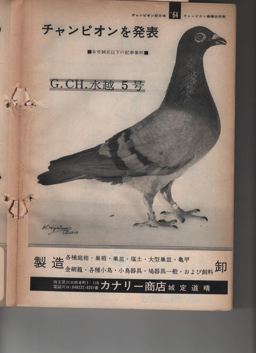 埼玉 レース 鳩 ジビエ