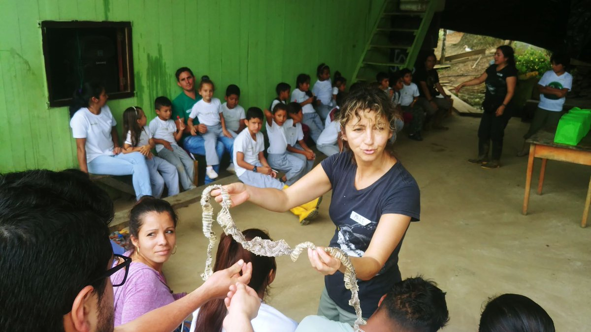 NEW BLOG: Find out about María's journey to becoming one of the few female herpetologists in Latin America in our latest blog! 🐍🇪🇨 #Vivariumquito #mujeresyconservacion #ConservationOptimism   This blog is available in Spanish and English: https://t.co/9mVcpot7zm https://t.co/OurfTWDBYw