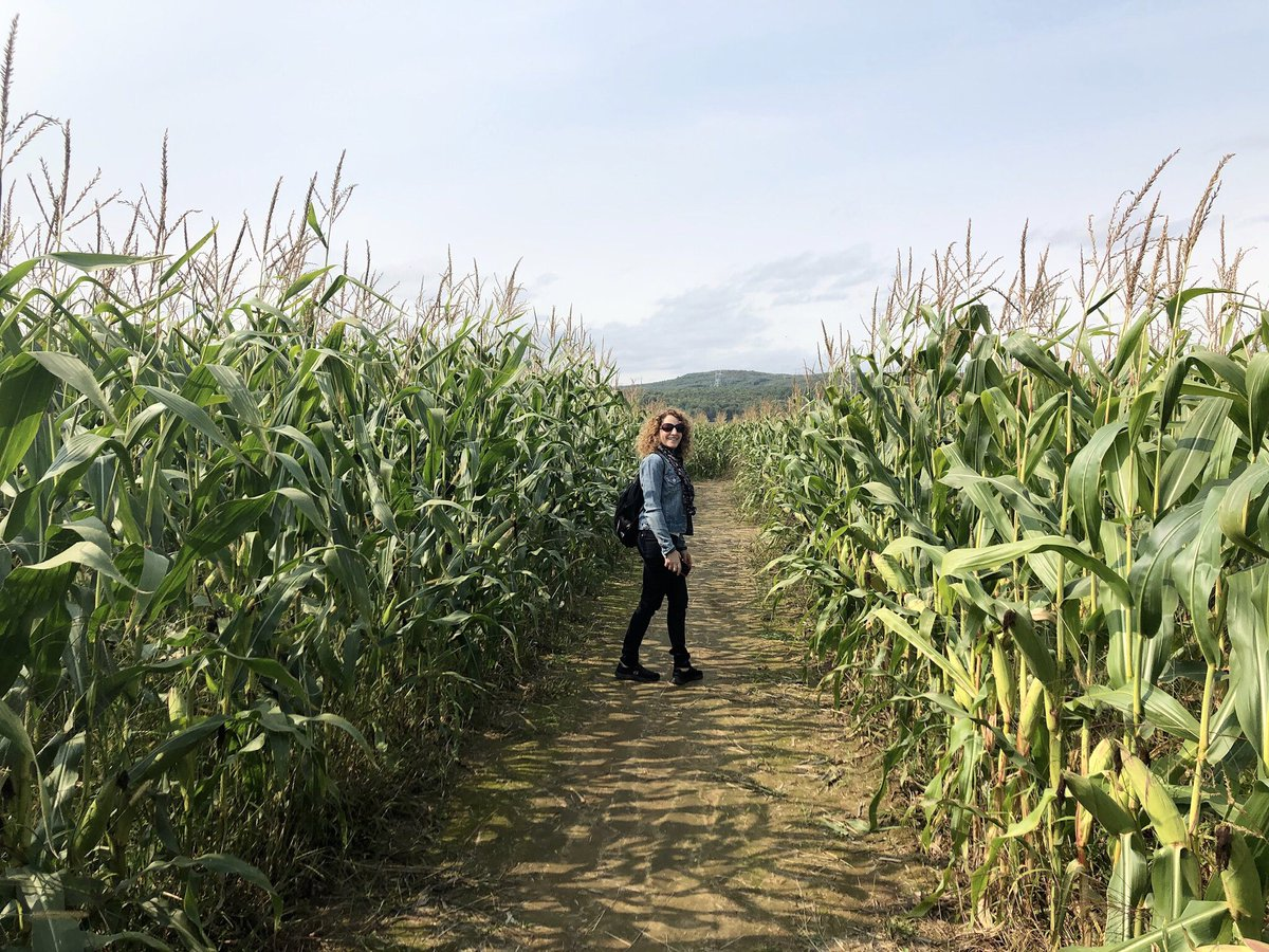 Labyrinthe de maïs 🌽 #Rawdon https://t.co/1sjn6LrrBr