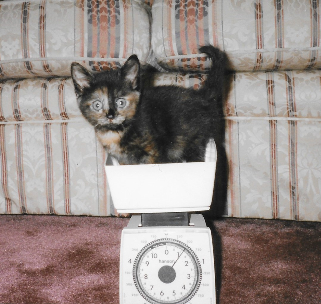 22 years ago to the day we brought home this little #tortie #nala 🐈❤️ #CatsOfTwitter #superseniorcatsclub https://t.co/IMAIKi9vox
