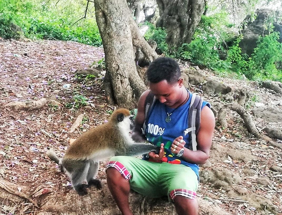 The feeding habits of Monkeys are very interesting. 🇪🇹🌍 🐒🐵 🙊🙉🙈 🍕  🌐 https://t.co/FtUvaTRt9G   #ethiopia #monkey #feeding  #mamaruethiopiantours #omovalley #mamarulocalguide #omoriver #travel #travelblogger #travelafrica #travelethiopia #seeafrica #visitafrica #love https://t.co/xkyq3dTCg8