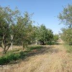 Image for the Tweet beginning: #KirazDiyari ağaçlar rahatladı. Gereksiz dallar