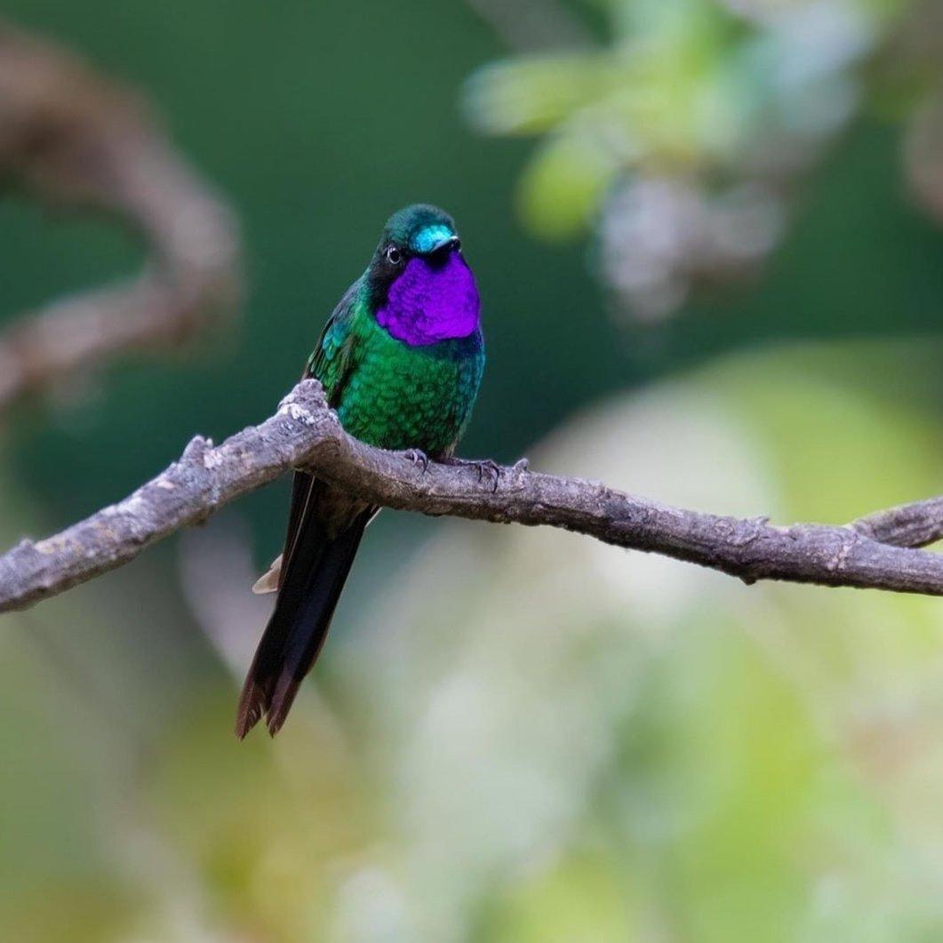 📍Loja, #Ecuador 🇪🇨 IG 📸 @alexboasphoto #Naturaleza #ÁreasProtegidas #VisitEcuador https://t.co/JaXCD2RMcz