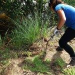Image for the Tweet beginning: El proyecto Anillo Verde de