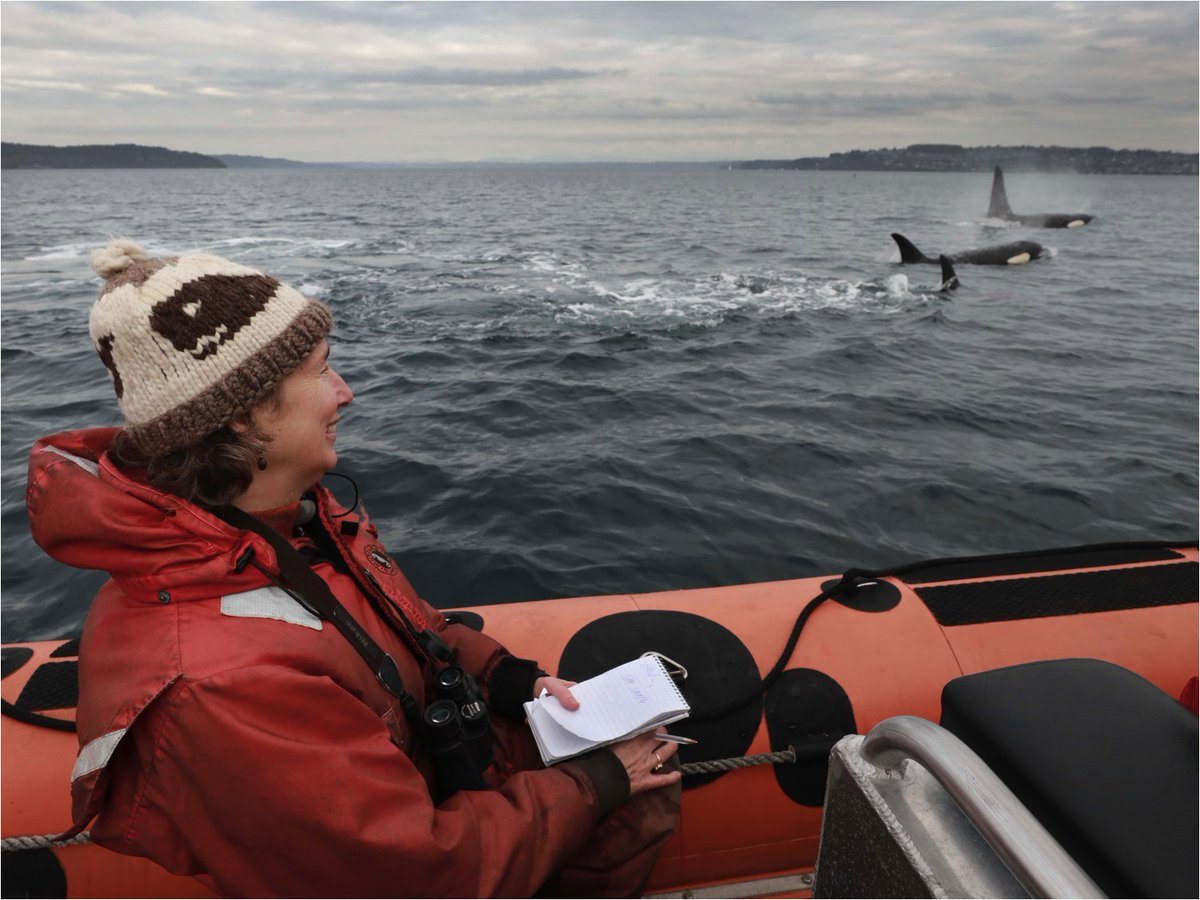 There's a new baby orca in the Salish Sea! Join @LyndaVMapes of @seattletimes TONIGHT at 6pm to learn about the health of the Southern Resident orca whales, Tahlequah's new birth & a new book! #orca #jointhepod https://t.co/unAM27wfKO https://t.co/LwwVSnvZ3r