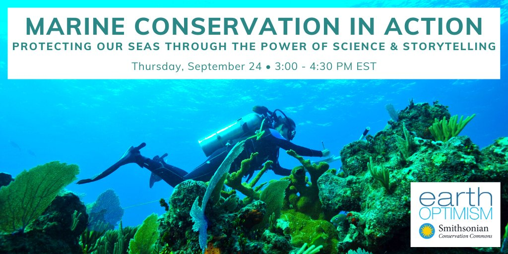 """On Thursday, September 24, from 3:00 to 4:30 PM EST, join the Smithsonian Conservation Commons for """"Marine Conservation in Action: Protecting Our Seas Through the Power of Science and Storytelling."""" Register for the webinar here: https://t.co/sF0H0rY28W https://t.co/OPxvI5nosS"""