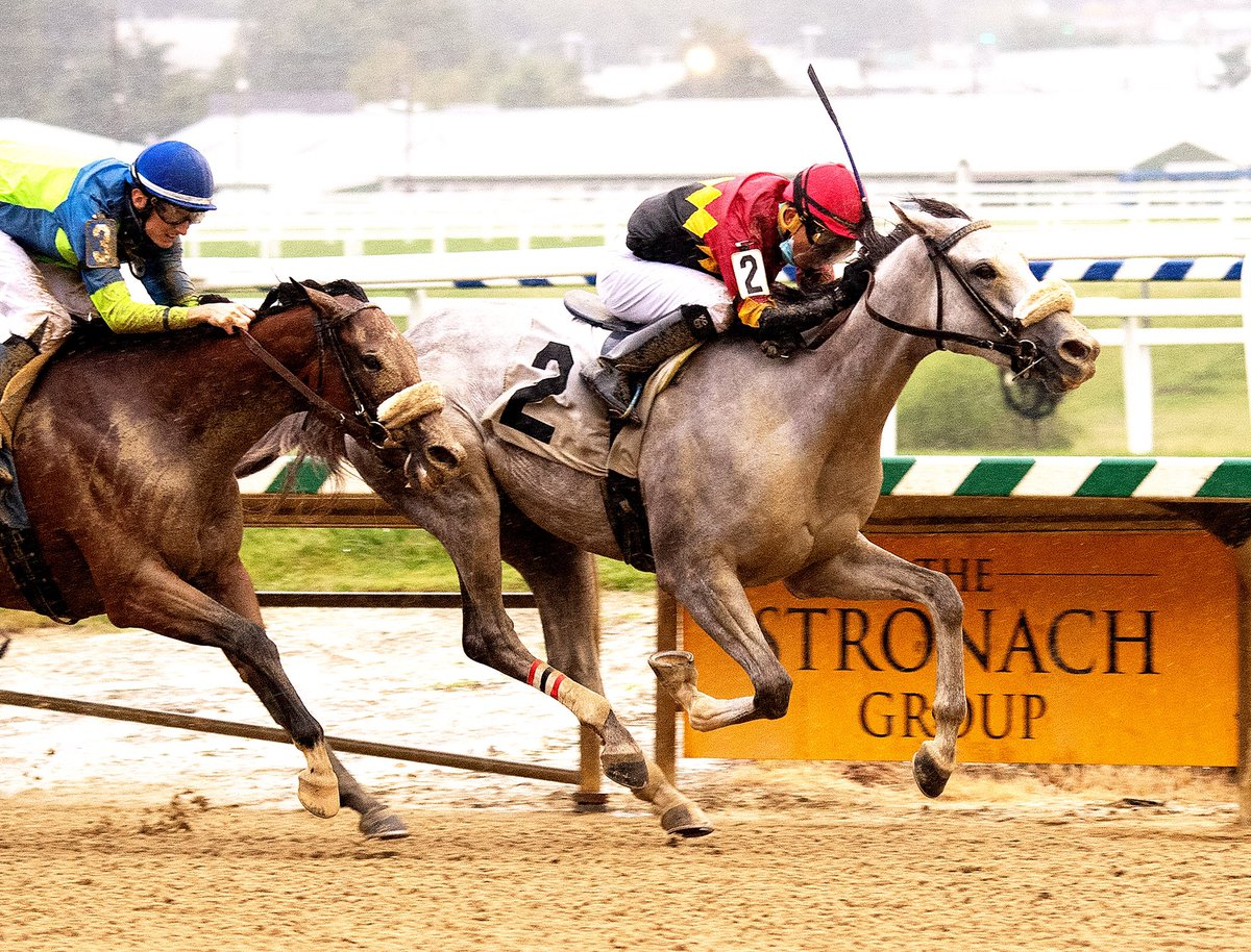 The versatile Coconut Cake wins 3rd in a row (2 dirt, one turf) in MD-restricted allowance @LaurelPark. Jockey @itz_lil_g up for @tlkracing and owners N R S Stable, Jim Chambers and Avalon Farm. 3YO @MarylandTB filly by Bandbox half-length shy of being 4-4. (Jim McCue 📷)