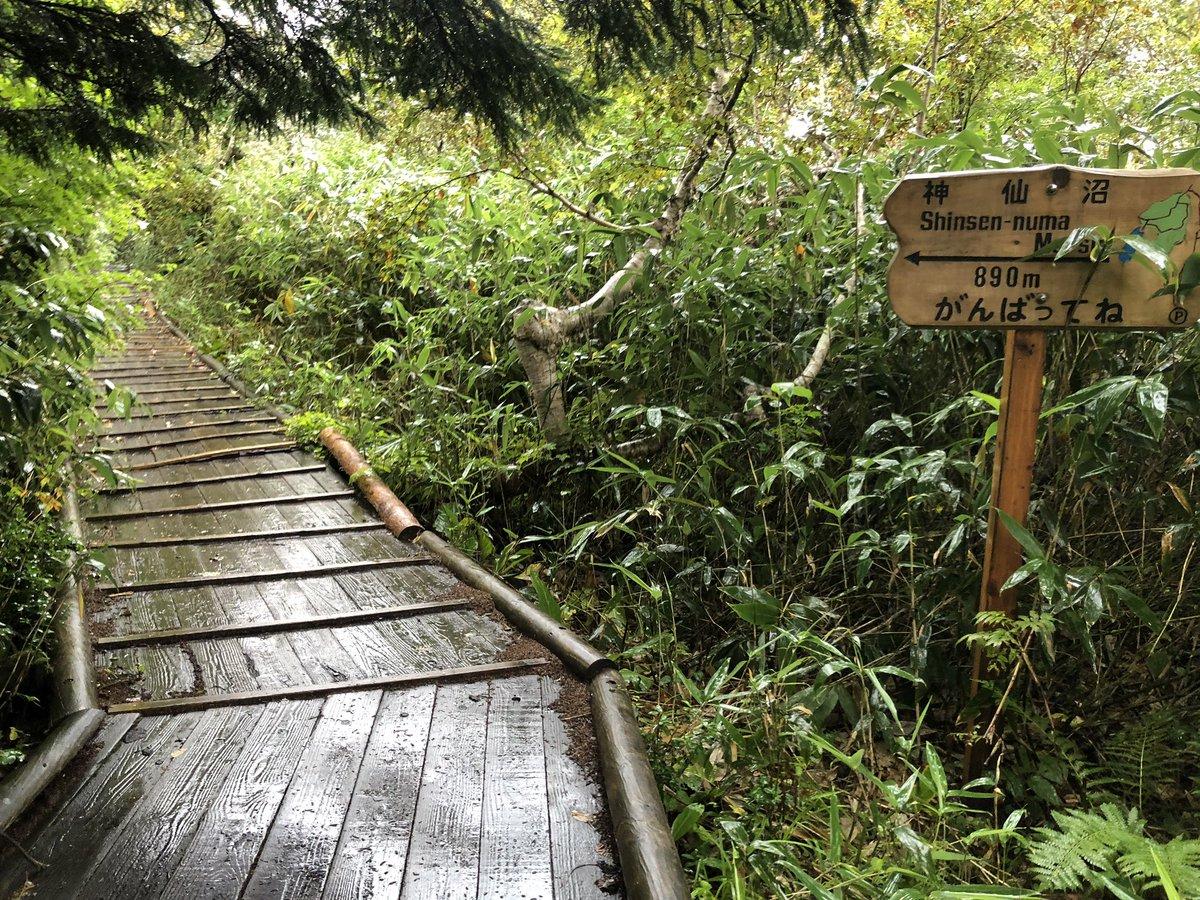タイムズ ピーク ジャングル の 秘境