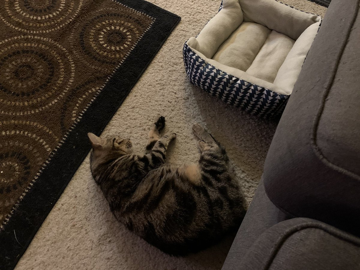 Pepper was so tired she was like the cat bed was to far for her, this spot is just as good! Zzzz! #Meow #CatsOfTwitter #ThursdayThoughts https://t.co/W8giQiGjaM
