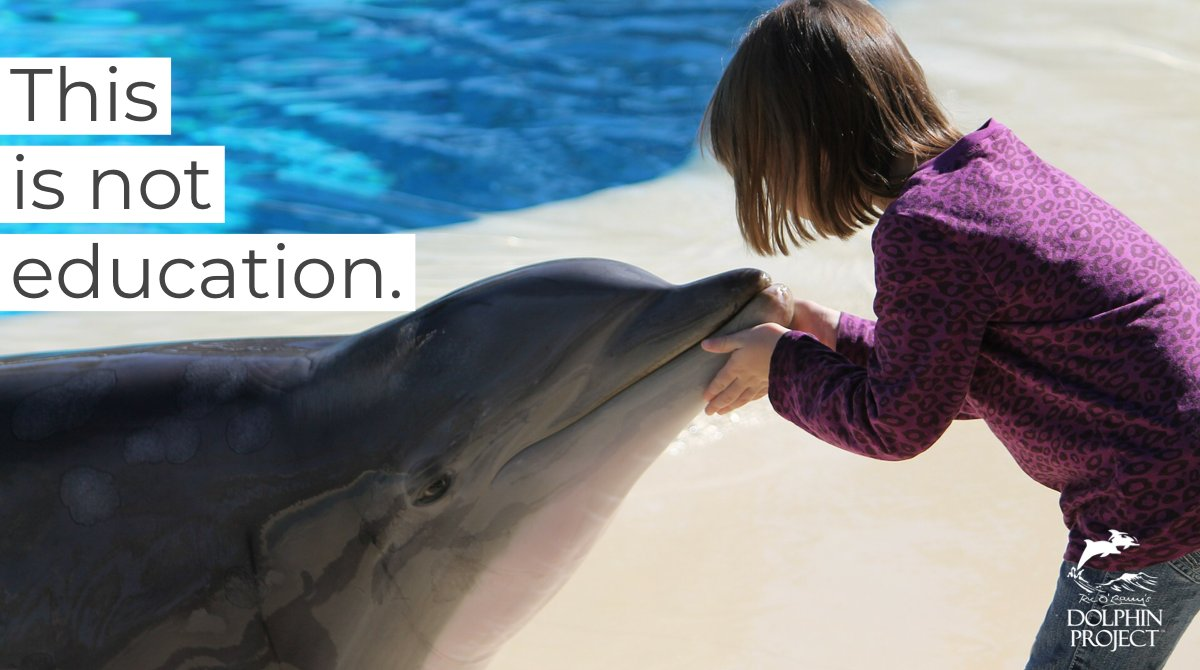 This is not education. This is exploitation. Learn more about The Mirage's captive dolphins, including those skin lesions, at https://t.co/kLWickm8Sx. #DolphinProject https://t.co/xLdwk78QT7
