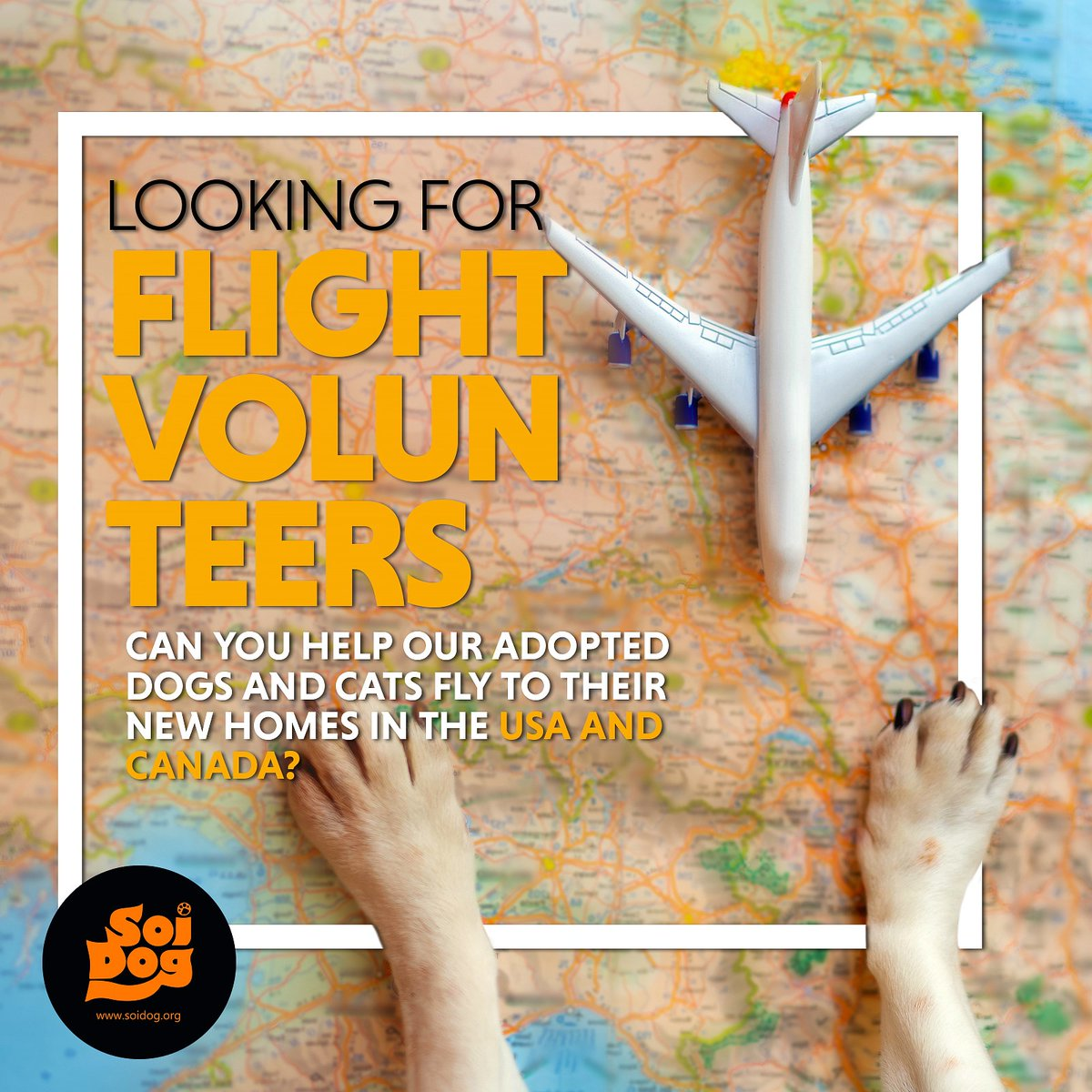 Are you planning to travel to #USA or #Canada #Europe from #Thailand ❓ Our doggies and kitties need your help getting to their #furever home. 🙏.   Being a #FlightVolunteer for Soi Dog is very rewarding & our logistics team will help you along the way.⬇  📧logistics@soidog.org https://t.co/Yro7a6q9Jr