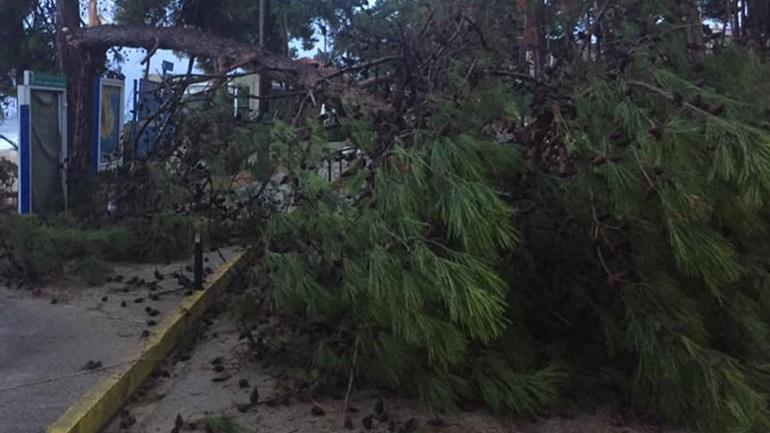 Μεγάλες ζημιές σε όλο το νησί της Κεφαλονιάς προκάλεσε ο Μεσογειακός Κυκλώνας που έπληξε τις βραδινές... κακοκαιρία Ιανός Κεφαλλονιά ΔΙΑΒΑΣΤΕ ΕΔΩ >> https://t.co/BotCvoPWdB https://t.co/gGXPwZPyzO
