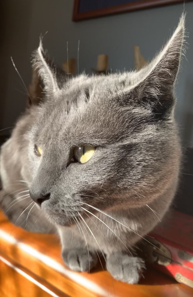 So many new and adorable furpals about these days. Drop your picture below and introduce yourself ... new and old, past and present furpals, of course. Let's see everyone. 😸 🐈 🐕 🐇 🐢 🐐  #cats #catsoftwitter #furpals #twitterpets https://t.co/tC8WzP3jTg
