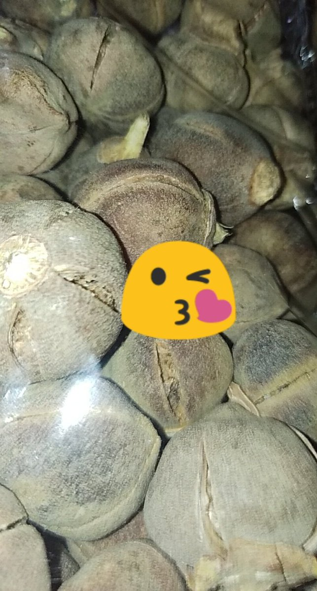 @MARKETPLACEGRP1 Your GORONTULA vendor is here again Dm/WhatsApp wa.me/2347063009197 to place your order Worldwide delivery