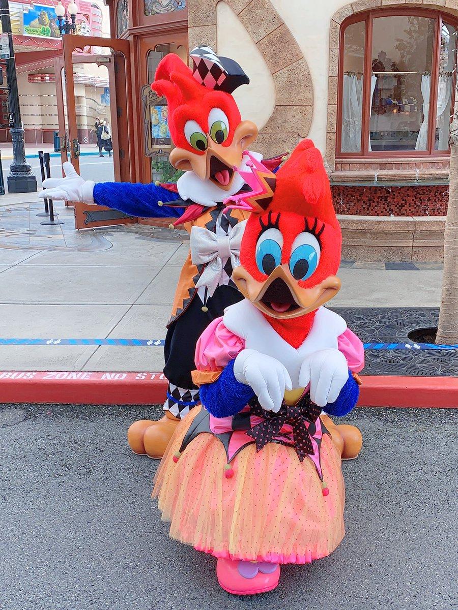 9月18日 ハロウィーン グリーティング  #ウッディ #ウィニー  ハロウィーン衣装がとても可愛かったです😍  #USJ #ユニバ #USJファン  #グリーティング https://t.co/ZOAiNj4rYB