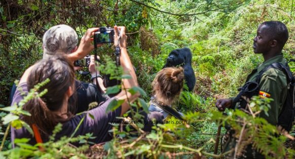 Gorilla trekking is one of the famous #ugandasafari activities. This #gorillatrekking activity gives you a one on one encounter with, #mountaingorillas in their natural habitat.  👉This activity takes place throughout the year https://t.co/Edgj41XRw3 https://t.co/dMxR3DEysr