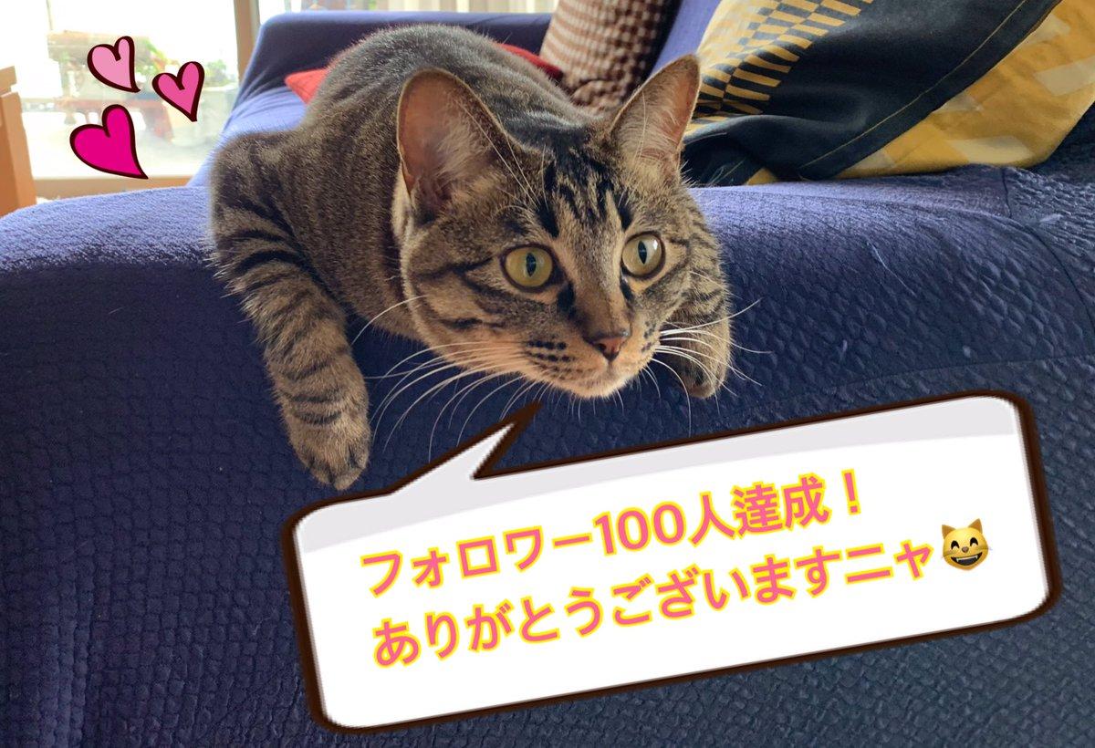 すっごく嬉しいですっっっ😆Twitterを始めて1週間、100人以上の方々と繋がれた幸せを噛みしめながら、これからも呟かせていただきます✨よろしくお願いしますニャ😸#ねこのいる暮らし #猫好きさんと繋がりたい #猫好き #転職#副業 #コーチング#メンタル