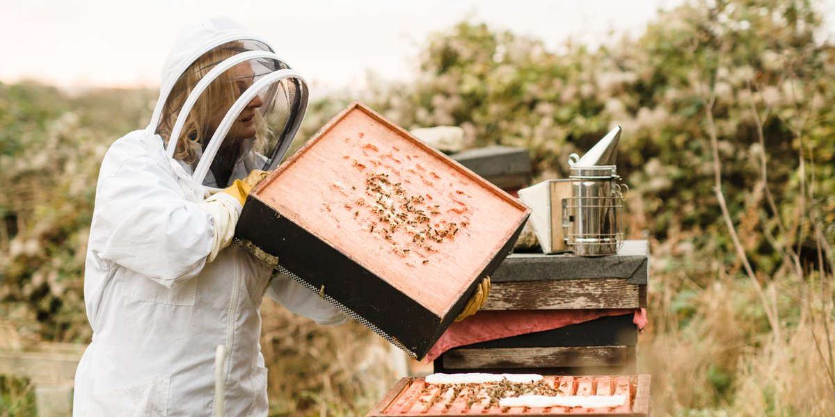 Ailbhe Gerrard of @farmbrookfield will be speaking to Damien O'Reilly on @RTECountryWide tomorrow morning from 8am. Make sure to tune in to hear all about honeybees and the ACORNS programme!    @agriculture_ie @RTERadio1 https://t.co/1bA0tGStuy