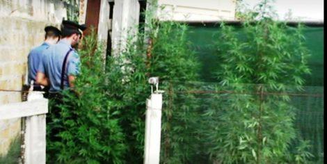 Scoperta nuova piantagione di marijuana a Misilmeri, denunciato anche un ragazzo di 15 anni - https://t.co/iPEwHPLoRs #blogsicilianotizie