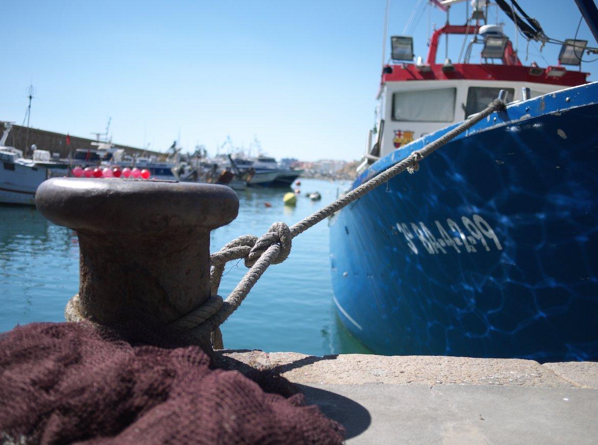 Blanes compta amb una flota pesquera de vaixells que surten diàriament a feinejar a la mar!🐠🐚🐙 #BlanesTurisme #CostaBrava #CatalunyaExperience #blanes #blanescostabrava #incostabrava #gironacostabrava #turismecatalunya #laselvaturisme @catalunyaexperience #port https://t.co/XnNXlPZ6G9