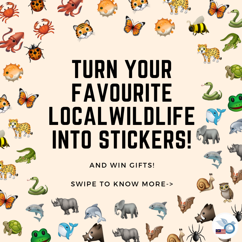 Did you hear about our Malaysia Day WhatsApp Sticker Competition?   You may choose to use real photos of wildlife or make your own artwork! Do DM us if you have any questions.. https://t.co/YoTurXi1Rb