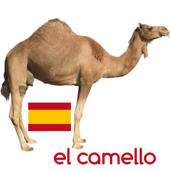 Camello #Español #palabras #palabra #idioma #idiomas #lengua https://t.co/sJ7Cf6uDYb