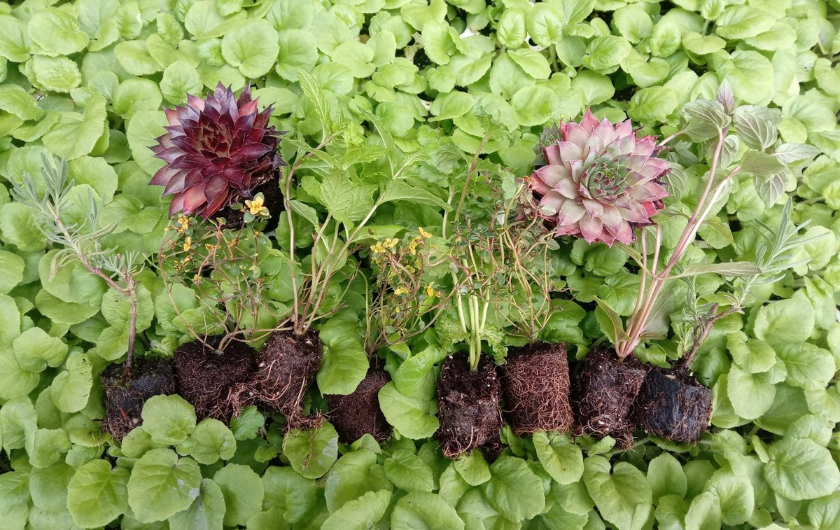 #Competition #Win  A collection of 10 FREE plug plants for growing on and producing spectacular flowers, scents and tastes in your garden. #RT+#Follow To Enter. 10 #WINNERS announced Tue 22/09 11AM!! Only a few hours left to enter!! https://t.co/3FC3CJq4Sa https://t.co/OtmVLkRgQG