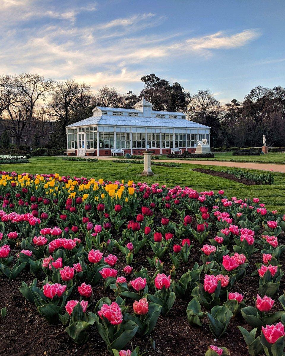 Spring has sprung with 50,000 tulips beginning to bloom in @ExploreBendigo 🌷 https://t.co/wBrc8TjYIE