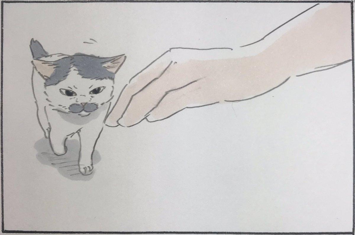 『セルフなでられ猫』