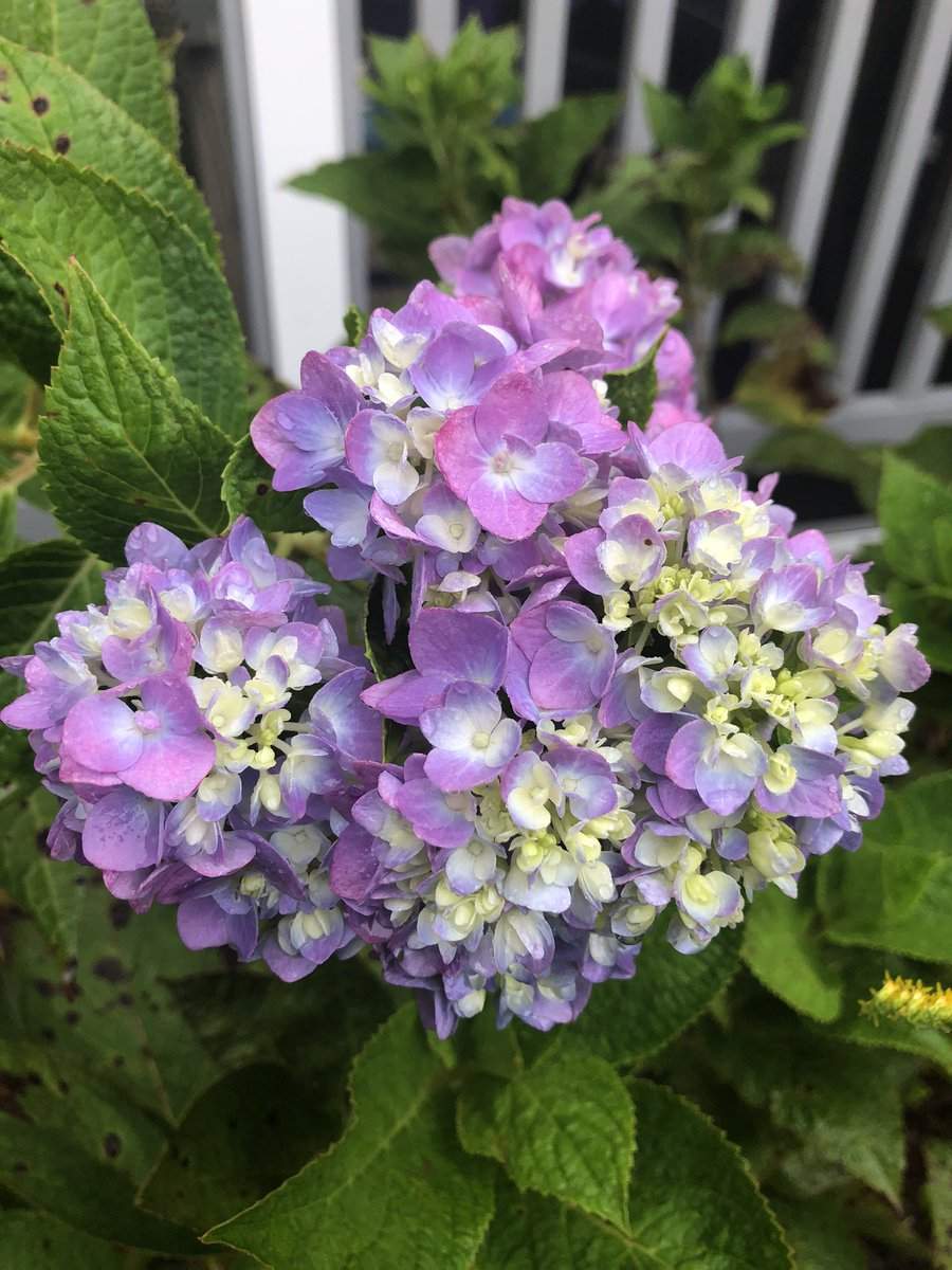 Things suck, but I'm enjoying the last hydrangea of the season. You should, too.